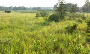 A coastal lake plain prairie just outside of Alpena, Michigan. Photo credit: Michigan Sea Grant